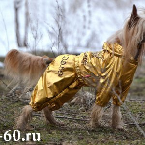 Комбинезон дождевик для собак золотой FMD
