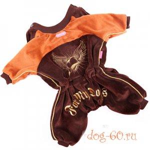 Костюм велюровый коричневый с золотой вышивкой, для кобелей.