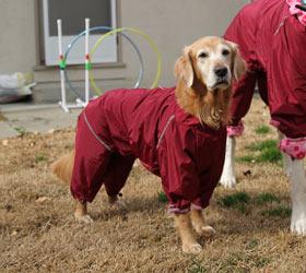 Комбинезон для собак демисезонный (см размер в размерной сетке)